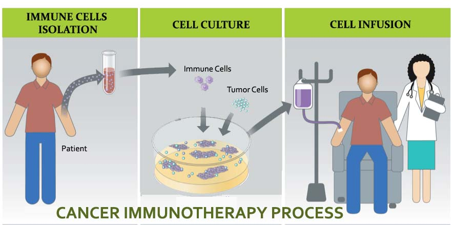 Cancer Immunotherapy Process